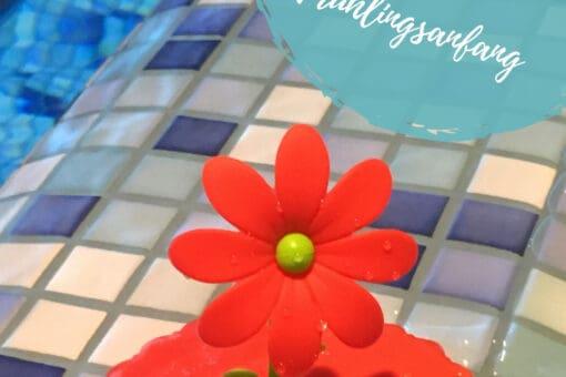 Frühlingsanfang, rote Blume im Hallenbad